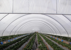 Covering for hotbeds and greenhouses of Solaroof