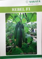 Rebel F1 Семена длинных огурцов