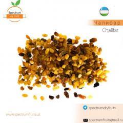 Изюм сорт Чалифар Spectrum Dry Fruits