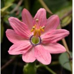 Семена декоративных растений