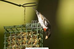 Оборудование для птицеводства Клетки для