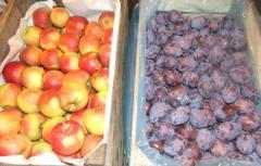 Яблоки и сливы разных сортов