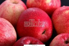 Яблоки свежие