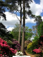Цветущих кустарников