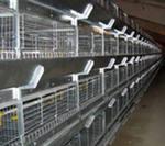 Оборудование для выращивания птицы
