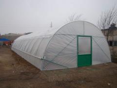The farmer greenhouse of tunnel type (from the