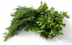 Greens fresh of Uzbekistan