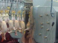 Убойни для птицы