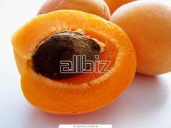 The apricots frozen