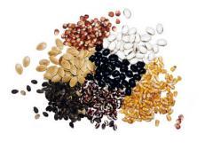 Medicamentos de fungicidas