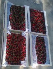 Sweet cherry fresh of Uzbekistan