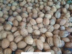 Орехи грецкие