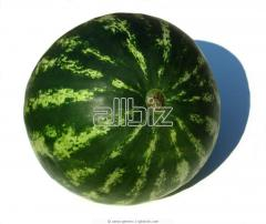 Water-melon and melon