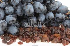 Виноград кишмишных сортов