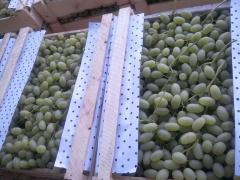 Husaini grapes