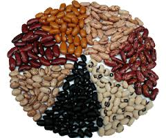 Kidney bean, haricot. Only for export.