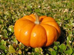 Pumpkins artificial