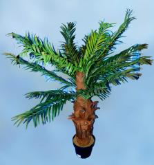 Palm tree banana decorative