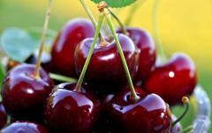 Sweet cherry decorative
