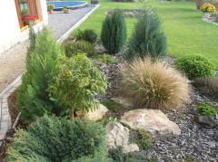 Decorative herbs