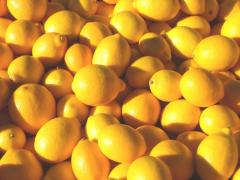 Lemons are decorative