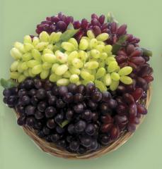 Grapes decorative