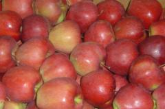 Яблоки свежие красные