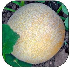 Citirex melon