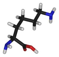 Незаменимая аминокислота Лизин (L-Lysine)