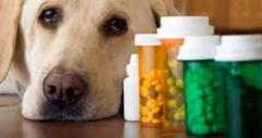 Medicines for animals.