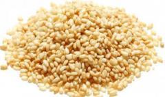 Sesame wholesale