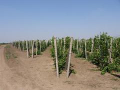 Шпалера для виноградников ж/б