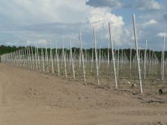 Опоры для фруктовых деревьев и виноградников
