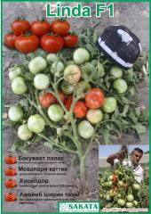 Семена томата Linda F1