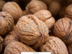 Орехи грецкие не очищенные (бабочки) 1 сорт