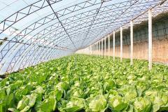 Теплица промышленная для овощей.