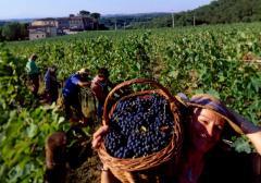 He Sulfo-must is grape