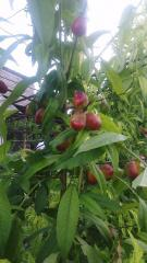Сад в теплице