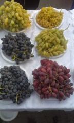 Саженцы, винограда