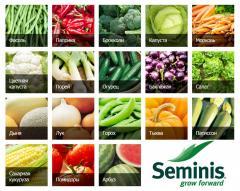 Семена овощей в Узбекистане от SEMINIS из первых