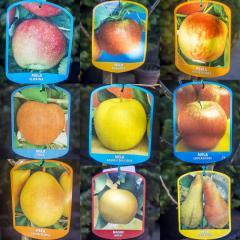 Saplings of the Italian Fruit Trees