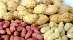 Peanut wholesale in Uzbekistan