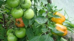 Fertilizers for sensitive cultures