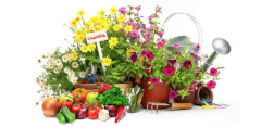 Mineral fertilizers for a garden