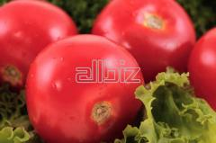 Tomatoes for expor