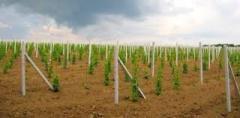Железобетонные опоры для виноградных садов