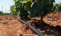 Systems of a drop irrigation and microclimate