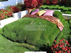 Lawn in Tashken