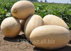 Melons Uzbek