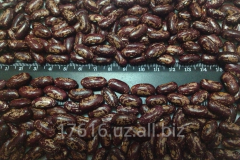 Red motley beans in bags of 25/50 kg